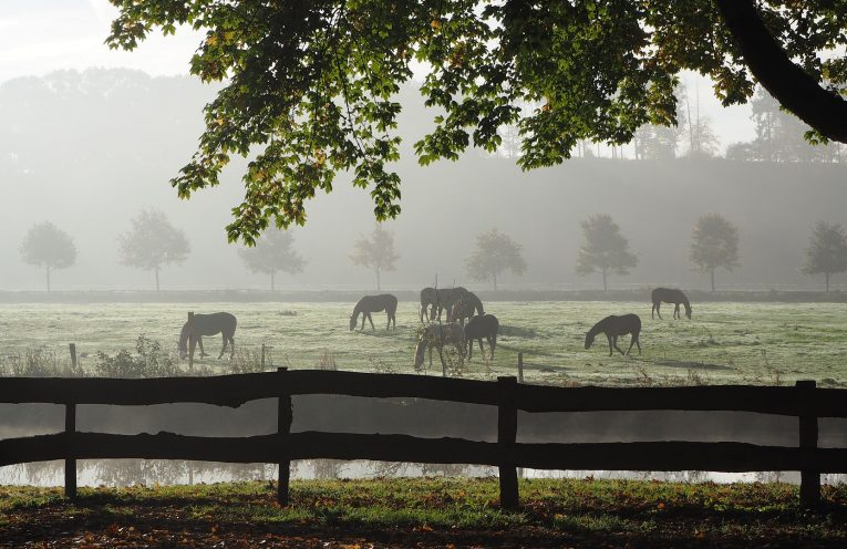 Immunprophylaxe Pferd