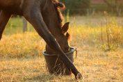 Zusatzfutter in der Pferdefütterung