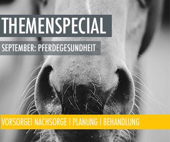 Themenmonat September: Pferdegsundheit