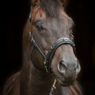 Equizaum Blakck Deluxe an braun-schwarzem Pferd