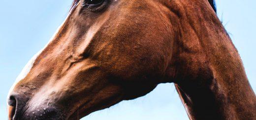 Mit dem Pferde-Logbuch alle Gesundheitsdaten im Blick