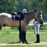 Sponsoring Reitsport- Sponsoren finden